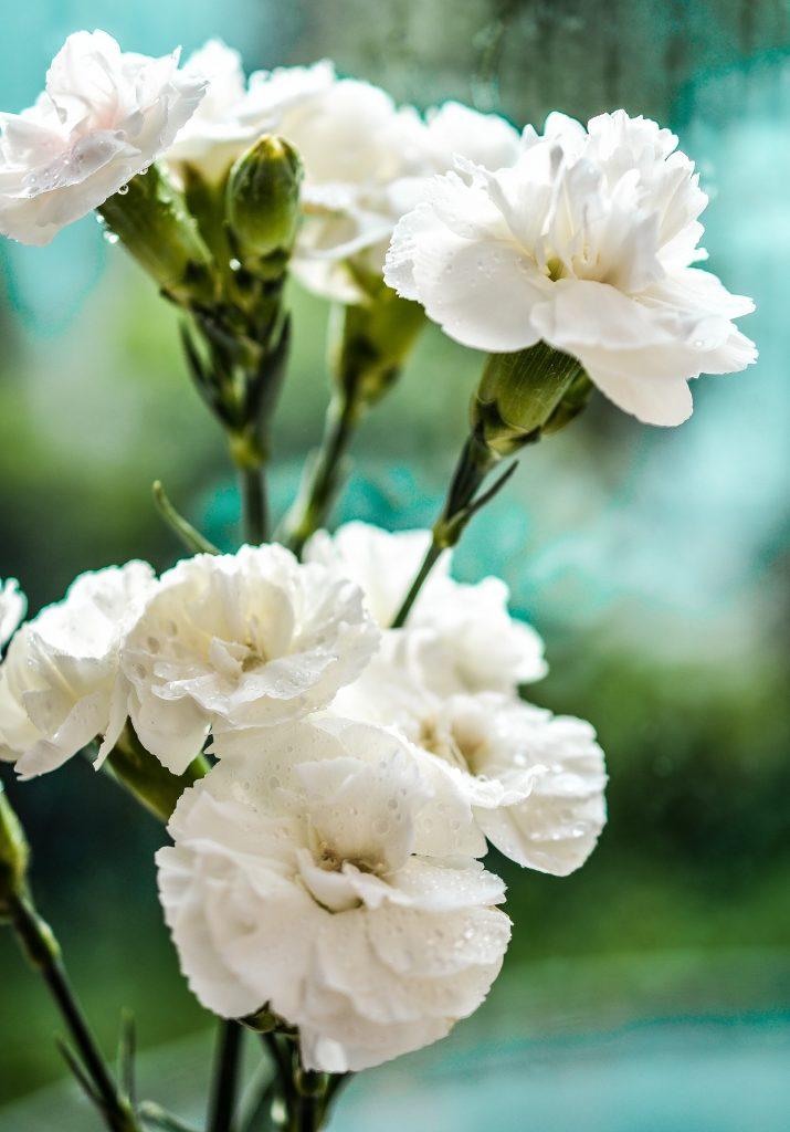 A Húsvét virágai 2