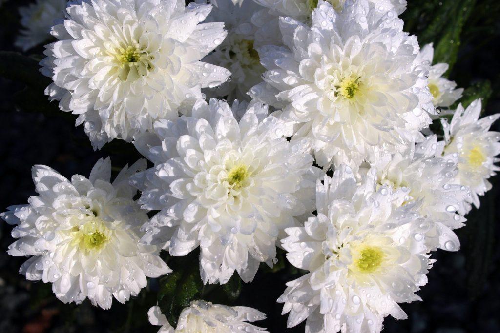 A Húsvét virágai 4