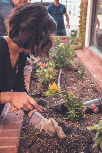 Ébred a kert - Kert szépségverseny 2